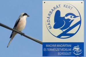 Read more about the article Madárbarát kert minősítést szereztünk!
